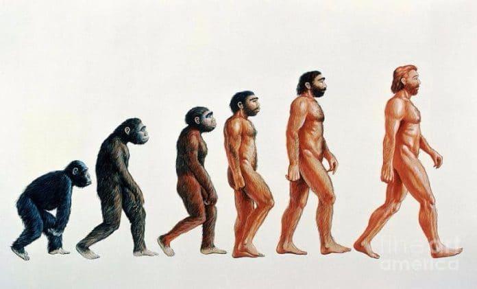 Сходство человека с млекопитающими