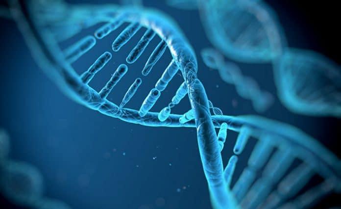Молекулы белков состоят из большого числа молекул аминокислот