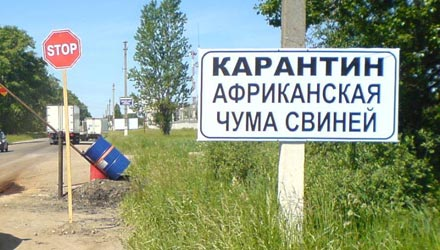 Белорусы опровергают слухи о вспышке африканской чумы свиней