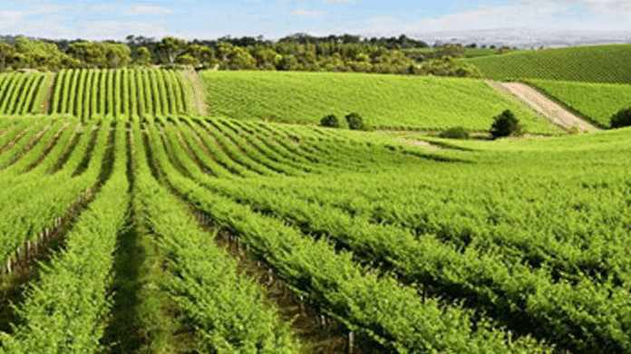 Сельскохозяйственные экосистемы агроэкосистемы