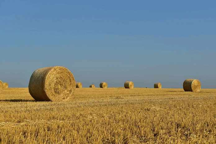 Снижаем потери сена при заготовке